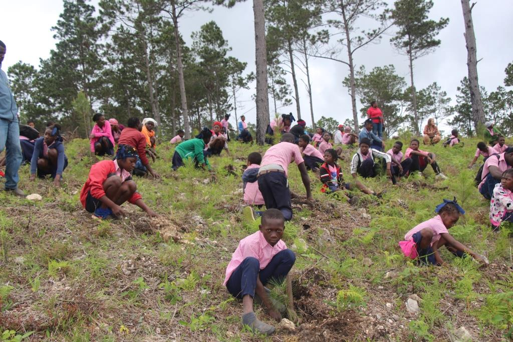 soh reforestation project in b negresse 8