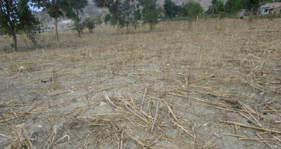 Fält som torkat i Haiti
